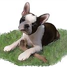 Beans the Boston Terrier by Cazzie Cathcart