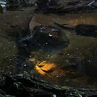 There's gold in that there creek by Anthony Ogle