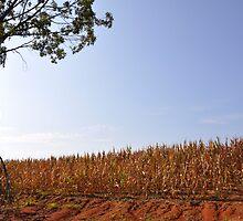 alone in the corn field by budrfli