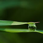 Morning Dewdrop by thepathtraveler