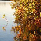 Reflecting on Mangroves by Graham Mewburn