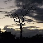 Lightning tree and a moody sky by LivWildlife