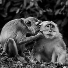 Dear don't be angry. Let me kiss kiss...... by Steven  Siow