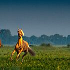 Three horses by THHoang