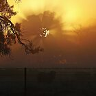 Sunrise through Winter Fog by Julie Sleeman