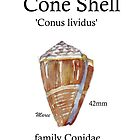Pearly Cone Shell by Maree Clarkson