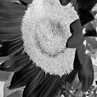 Inverted Monotone Sunflower  by Glenn Cecero
