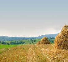 Hayrack panorama by wildrain