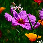 Wild Flowers by Paul Revans