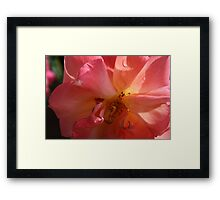 A PINK ROSE JUST FOR YOU  Framed Print