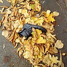 shoe lost in leaves by H J Field