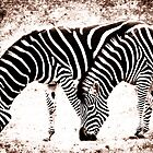 In Harmony - Zebra  by ©FoxfireGallery / FloorOne Photography