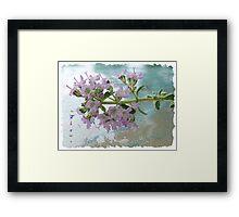~ Thyme ~ Framed Print