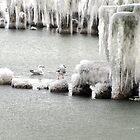 Gulls by Mikhail Krupenin