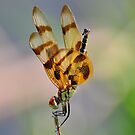 Halloween Pennant by Chris Ferrell