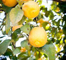 Pre-Lemonade by SarahSandoval