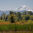 Mnt Rainier  by DiamondCactus