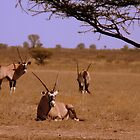 Gemsbok..... by LivWildlife
