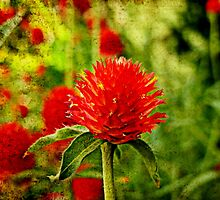 The Red Clover by Scott Mitchell
