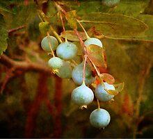 Berries Blue by vigor
