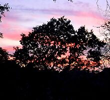 Pink sky at night by shelleybabe2