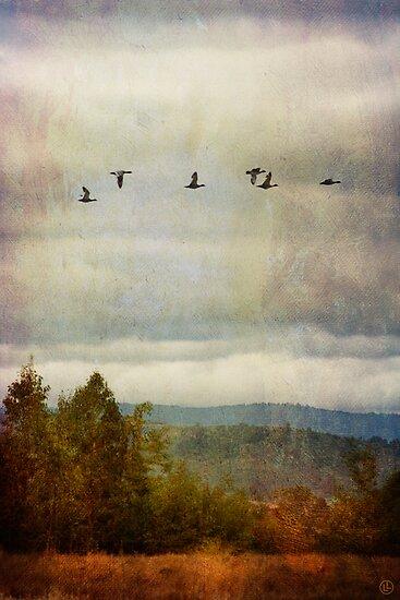 Flying Home by Linda Lees