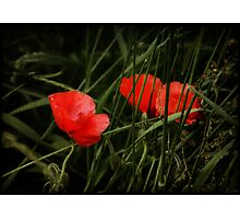 Night Poppies Photographic Print