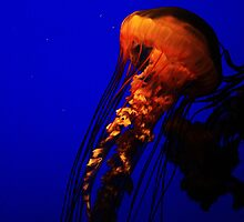 Orange Jellyfish by tori325
