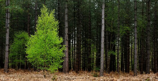 The lone decidous by Gary Heald LRPS