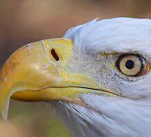 Eagle Eye by naturalnomad