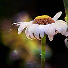 *Star Dusted Daisy* by DeeZ (D L Honeycutt)