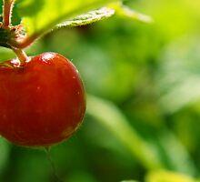 Berry-licious by Rhonda Blais