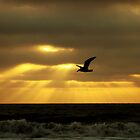 solo flight by Brian HMUROVICH