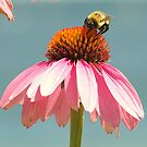 Bee on a Cone (View Large!) by BarbL