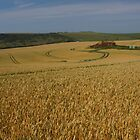 Wheat And House by glynk