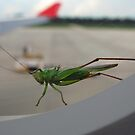 Air Berlin bug. by queenxtc