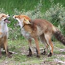 Mother and child red fox  by DutchLumix
