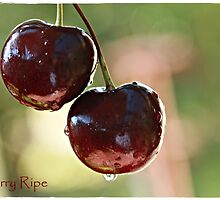 Cherry Ripe by chloemay