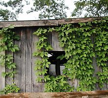 shed with vines by Jackie Penney