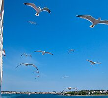 GULLS FOLLOWING THE SHIP. by ronsaunders47