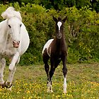 Appaloosa mare & foal ~ 3542 by heidiannemorris