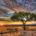 Tree at Sunset by njordphoto