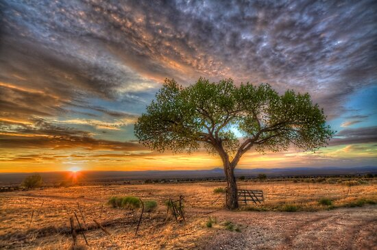 Tree at Sunset by njordphoto