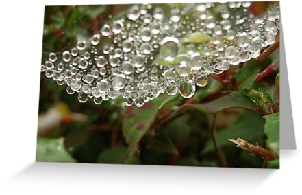 Water droplets - Spider's web by Conor Donaghy