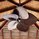 The Fan by BK Photography
