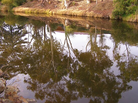 Early morning reflections, Victoria Creek,Willaimstown. by Rita Blom