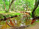 New Forest Stream by Colin J Williams Photography