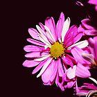 Pink Flower in the Dark by EducatedSavage