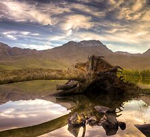 That'ol Tree by Gustav Snyman
