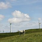 Cow in a Field by Julesrules